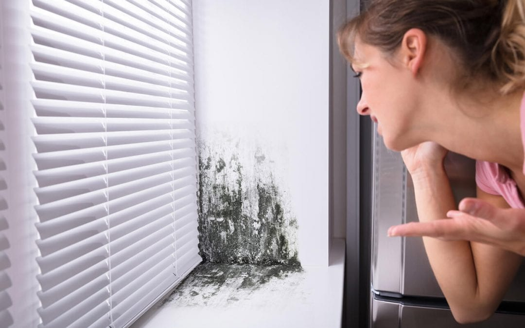 4 Mistakes That Cause Mold in the Home