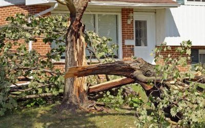 6 Tips to Protect Your Home From Wind Damage